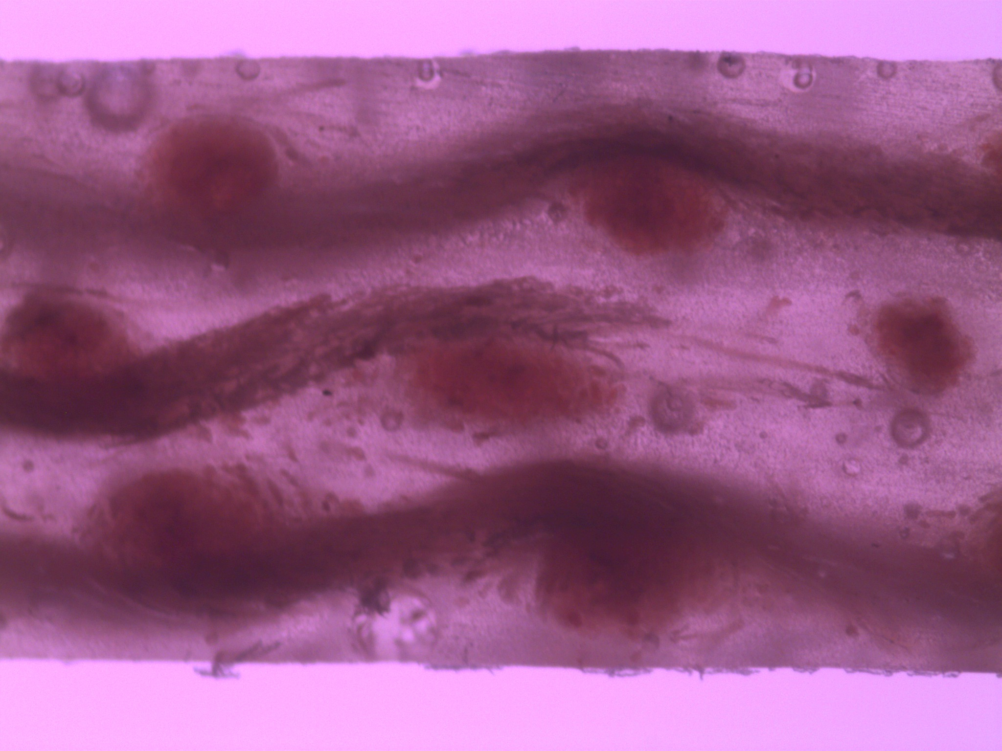 composites-microscopy/vacuum.jpg
